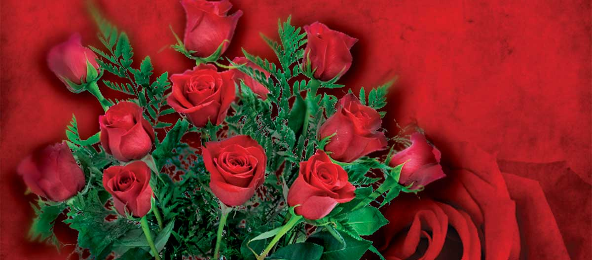 Photo of red roses.