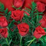 Image of one dozen red roses